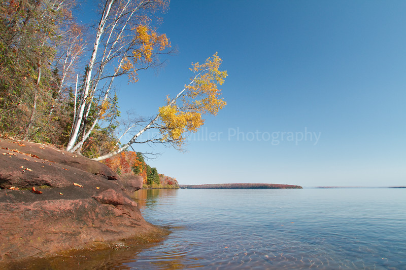 Bayfield County, WI, Fall Color Trees Overhanging Lake Superior
