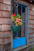 Bayfield County, WI, Flower Hanging in Front of Blue Window