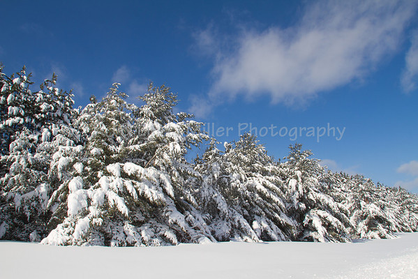 Snow Covered Trees, Bayfield County, Wisconsin