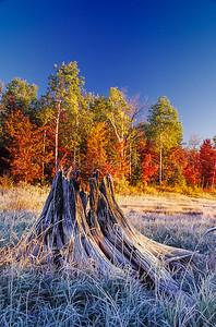 WI046577-02 - WI Iron - Tree Stump Frost Grass