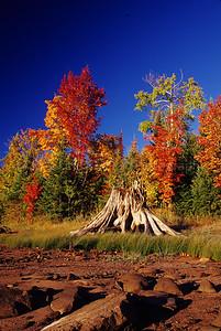 WI046596-02 - WI Iron - Tree Stump in Grass