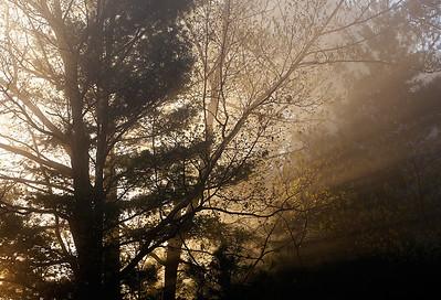 Sunrise Sunrays (Northern Highland American Legion State Forest - Wisconsin)
