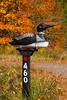 A roadside loon mailbox near Minocqua, Wisconsin, USA.
