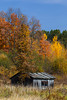 A small shack in the forest with fall foliage color in northern Wisconsin, USA.