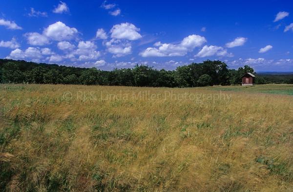 WI047915 Iowa County - Small Barn - Field