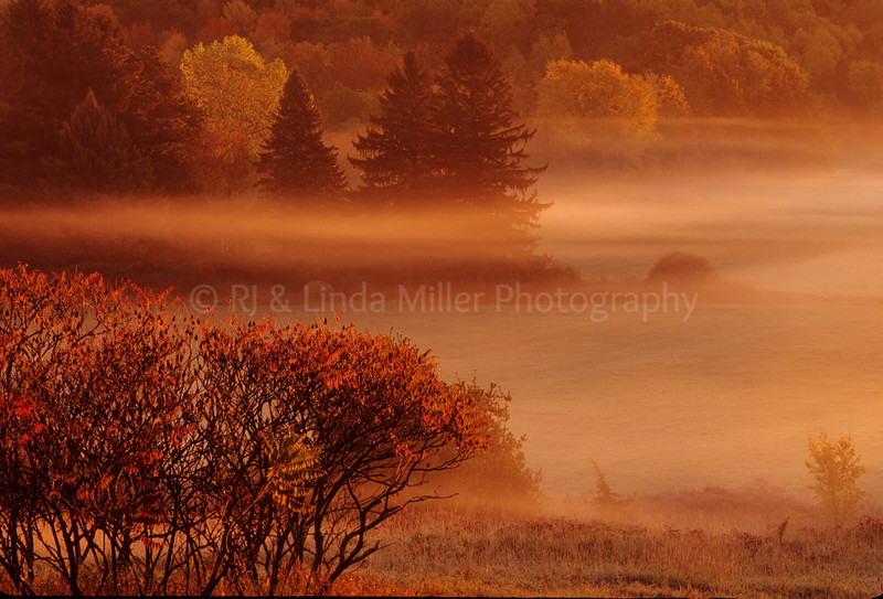 Foggy Morning on Devils Lake State Park