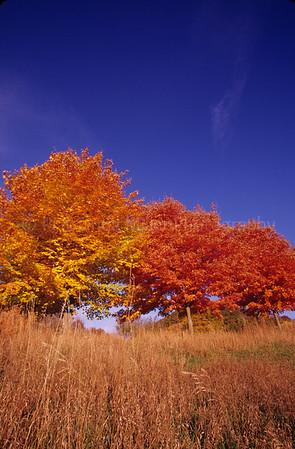 WI047152 Vernon - Fall  Colorer Maples
