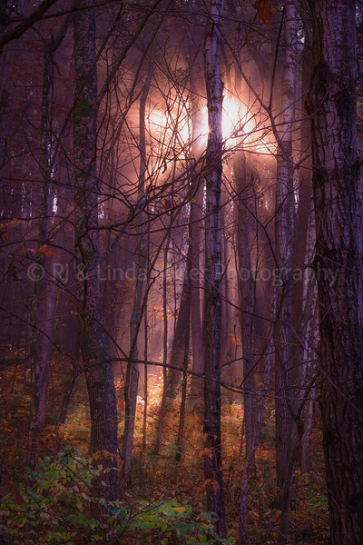 Sunlight Through Foggy Forest