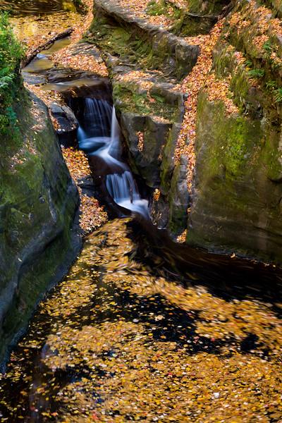 Skillet Creek Autumn Leafs