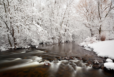 Snowy White - East Branch Milwaukee River (Kettle Moraine State Forest - Northern Unit)