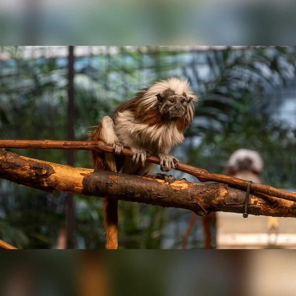 2019 Wisconsin: Milwaukee County Zoo Photo Slideshow