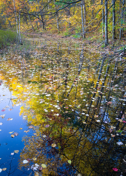 WI 195<br /> <br /> Autumn reflections in a vernal pool near Fallison Lake.  Villas County, Wisconsin.