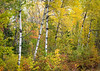 WI 152<br /> <br /> Birch trunks punctuate the peak autumn color along County Highway D in northern Wisconsin.