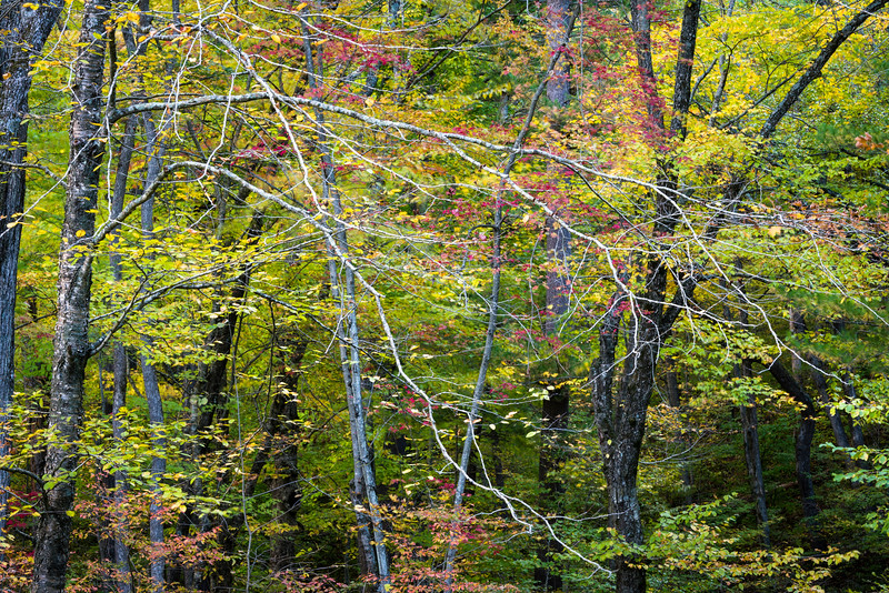 WI 129     Fall color at Baxter's Hollow, a Nature Conservancy Site in Sauk County, Wisconsin.