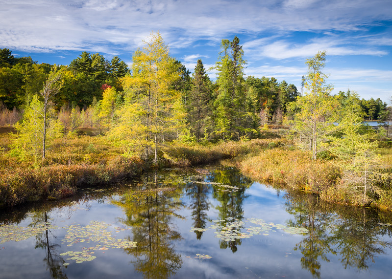 WI 153<br /> <br /> Sunset reflections of autumn larch trees in a Northwoods tamarack bog in northern Wisconsin.