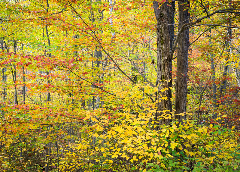 WI 151<br /> <br /> Peak autumn color in the Northwoods of Oneida County, Wisconsin.