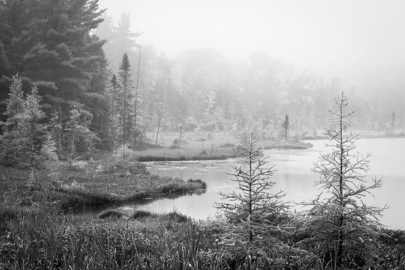 WI 139     A foggy autumn morning on a small lake in a tamarack bog in northern Wisconsin.