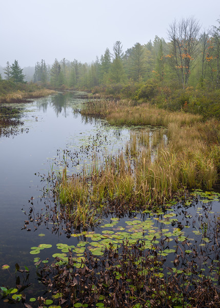WI 164<br /> <br /> A misty autumn morning along Rice Creek in the Northwoods of northern Wisconsin