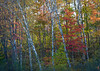 WI 173<br /> <br /> Fall color in the northwoods of northern Wisconsin.