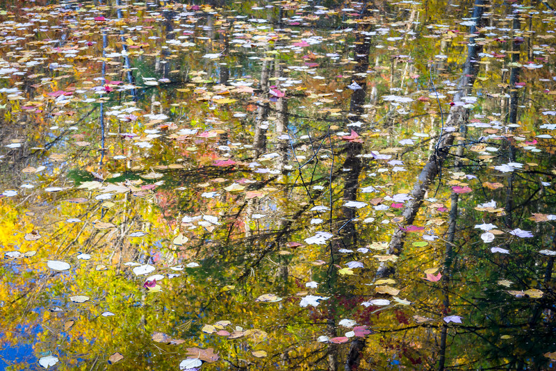 WI 194<br /> <br /> Autumn reflections in a vernal pool near Fallison Lake.  Vilas County, Wisconsin.