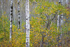 WI 168<br /> <br /> Fall color in the north woods of northern Wisconsin.