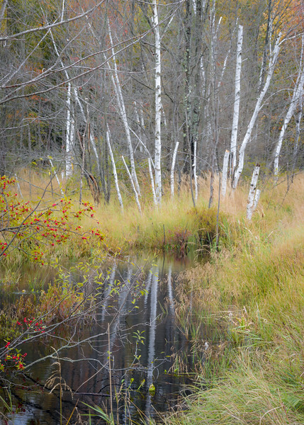 WI 169<br /> <br /> Birch trunks reflected in a small bog in northern Wisconsin.