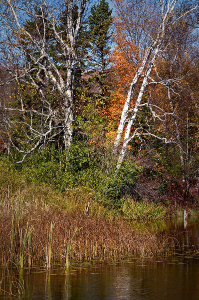WI 048                            The trunks of birch trees punctuate the autumn colors on the shore of Kangaroo Lake in Door County, Wisconsin.