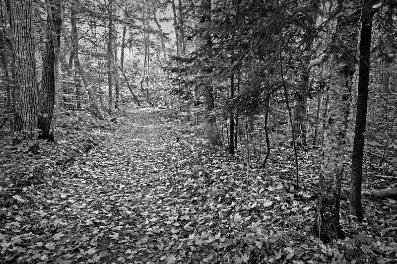 WI 066                           A hiking trail through the autumn woods at Newport State Park in Door County, Wisconsin.