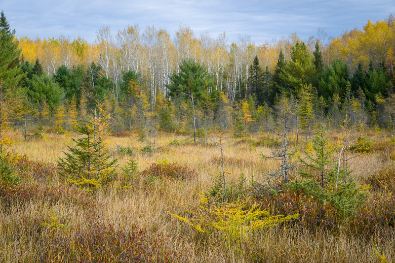 WI 200<br /> <br /> Autumn colors in a tamarack bog in norther Wisconsin.  Northern Highland-American Legion State Forest, Oneida County, Wisconsin.