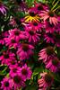 Flowers - Always one Non-Conformist
