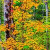 20151004_Wisconsin_0595