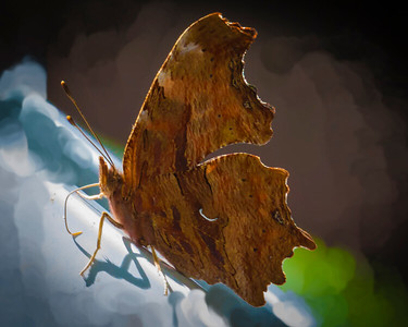 Comma in Wisconsin North Country