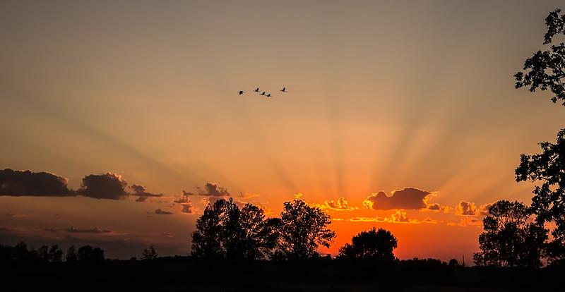 Crane Flight