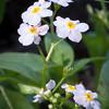 Tiny White Wildflowers