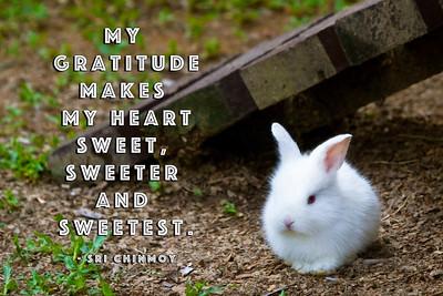 a-4 my gratitude makes