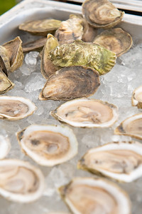 Oyster-8