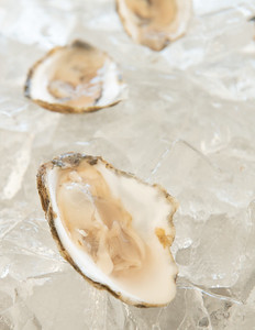 Oyster-23