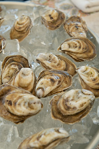 Oyster-40