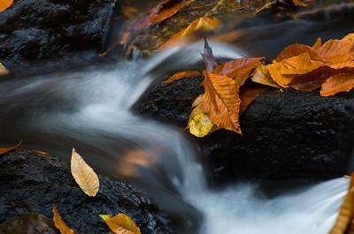 Wet Fallen Leaves in Late Autumn