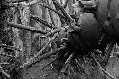 Fallen Forest #7