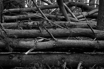 Fallen Forest #5