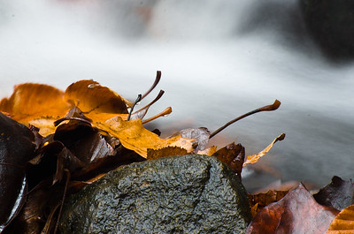 Wet Fallen Leaves in Late Autumn