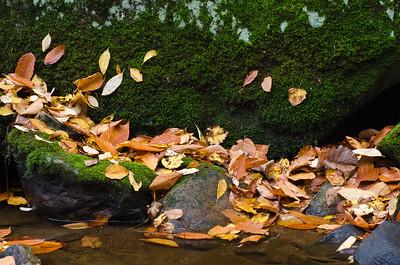 Wet Fallen Leaves on Moss Covered Rock