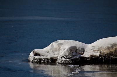 Snow Crocodile Lying in Wait