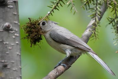 Nest Building Time