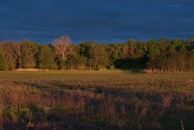 Dawn Light Spreading Across the Marsh