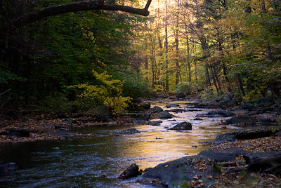 Autumn in the River Gorge