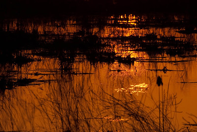 Dawn in the Marsh