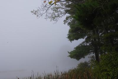 Fog on the Shore
