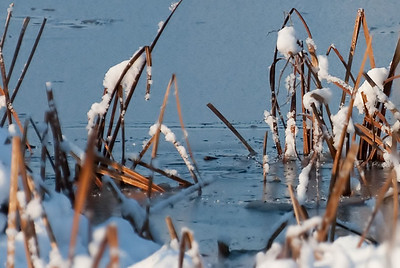 The Coming of Winter to the Marsh